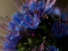 20120324-_z2461351
