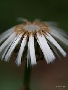 f 1,8 45 mm